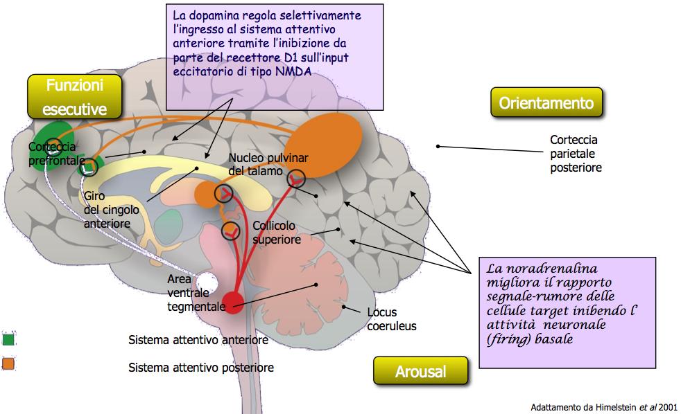 Neurochimica - sistemi malfunzionanti
